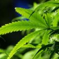 Nevada becomes fifth US state to allow cannabis sales for recreational purposes